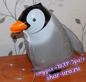 ходячка пингвин