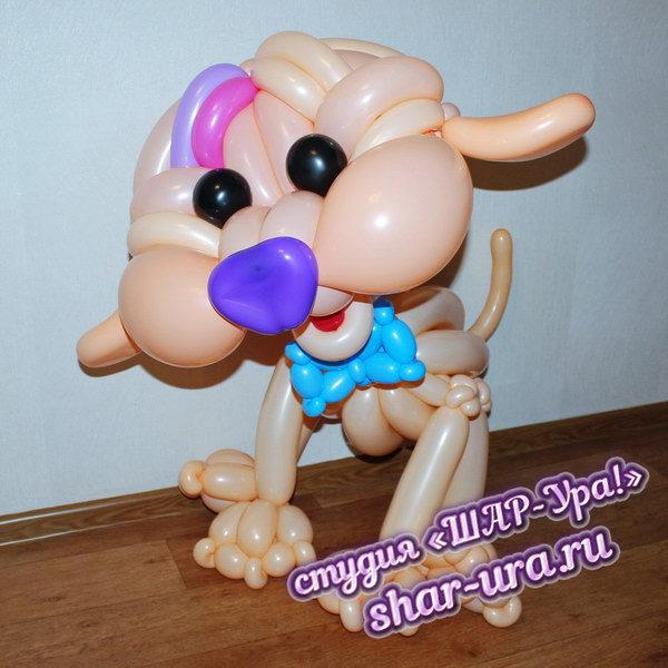 собака дудл из шаров